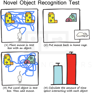 Figure 1.The Novel Object Recognition test. (1) A mouse is allowed to explore two identical sample objects in the test box for 10 min. (2) The mouse is placed back in the home cage for 1 hour. Varying this time can affect the final outcome of the test. (3) The mouse is carefully placed in to the test box that contains the old and novel objects, and is allowed to freely investigate the objects. (4) A typical summation of data from several mice showing that the time spent interacting with the novel object (red bar) was greater than that with the familiar object (blue bar).