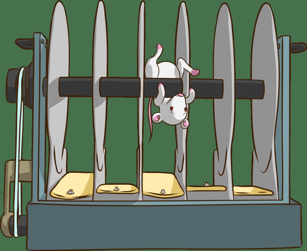 Cartwheeling - Rotarod Test for mice