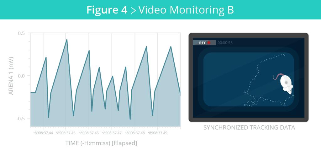 MazeEngineers_VideoPage_EthoVision_VIdeoB