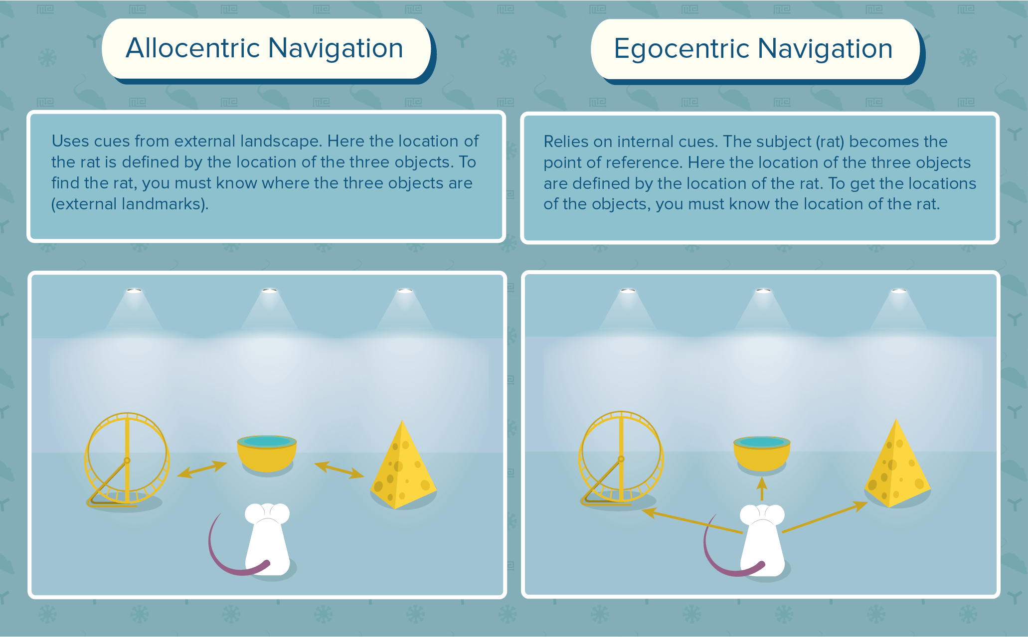 Spatial learning: allocentric navigation vs egocentric navigation
