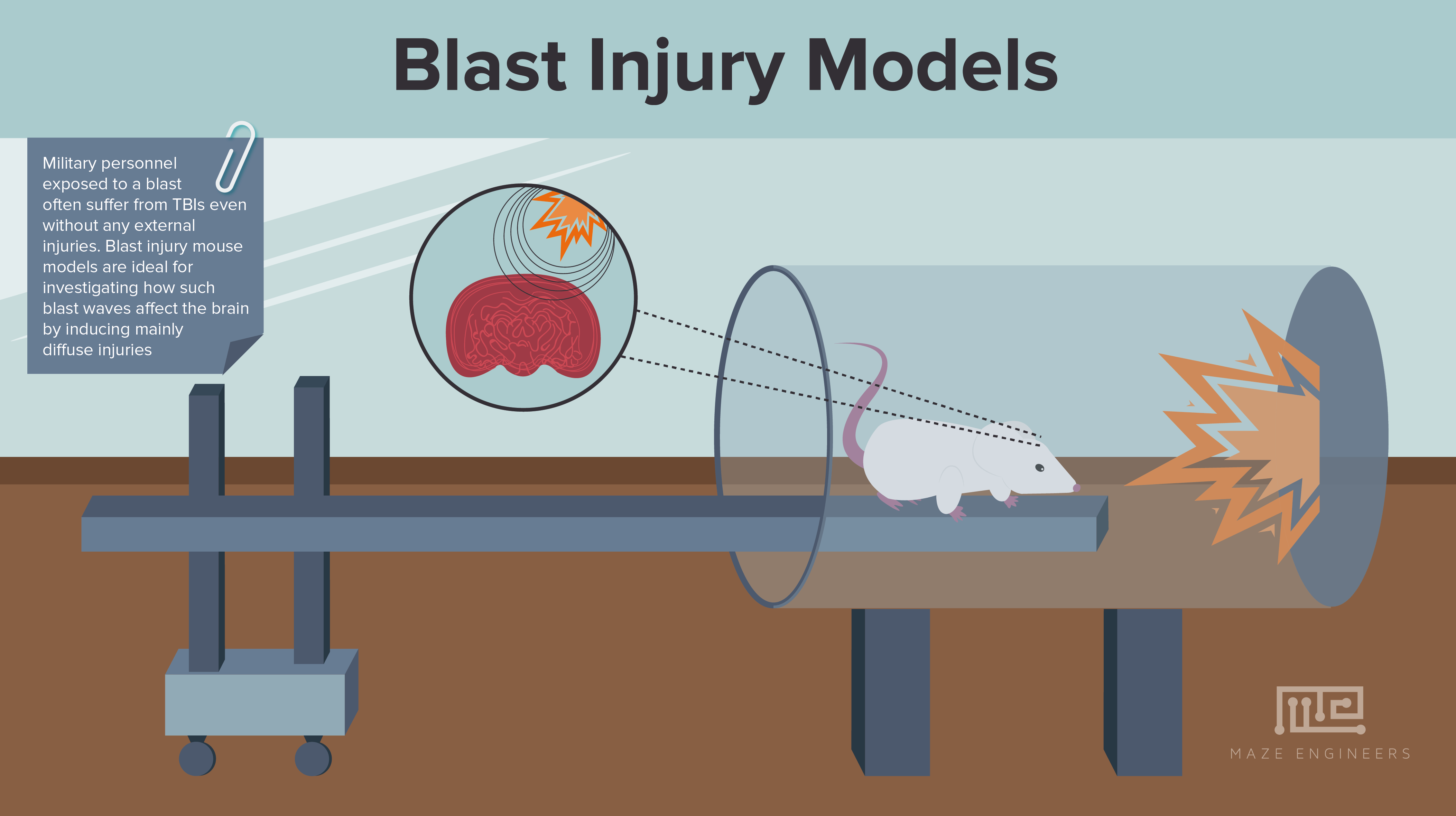 Image of animal models of Blast Traumatic Brain Injury