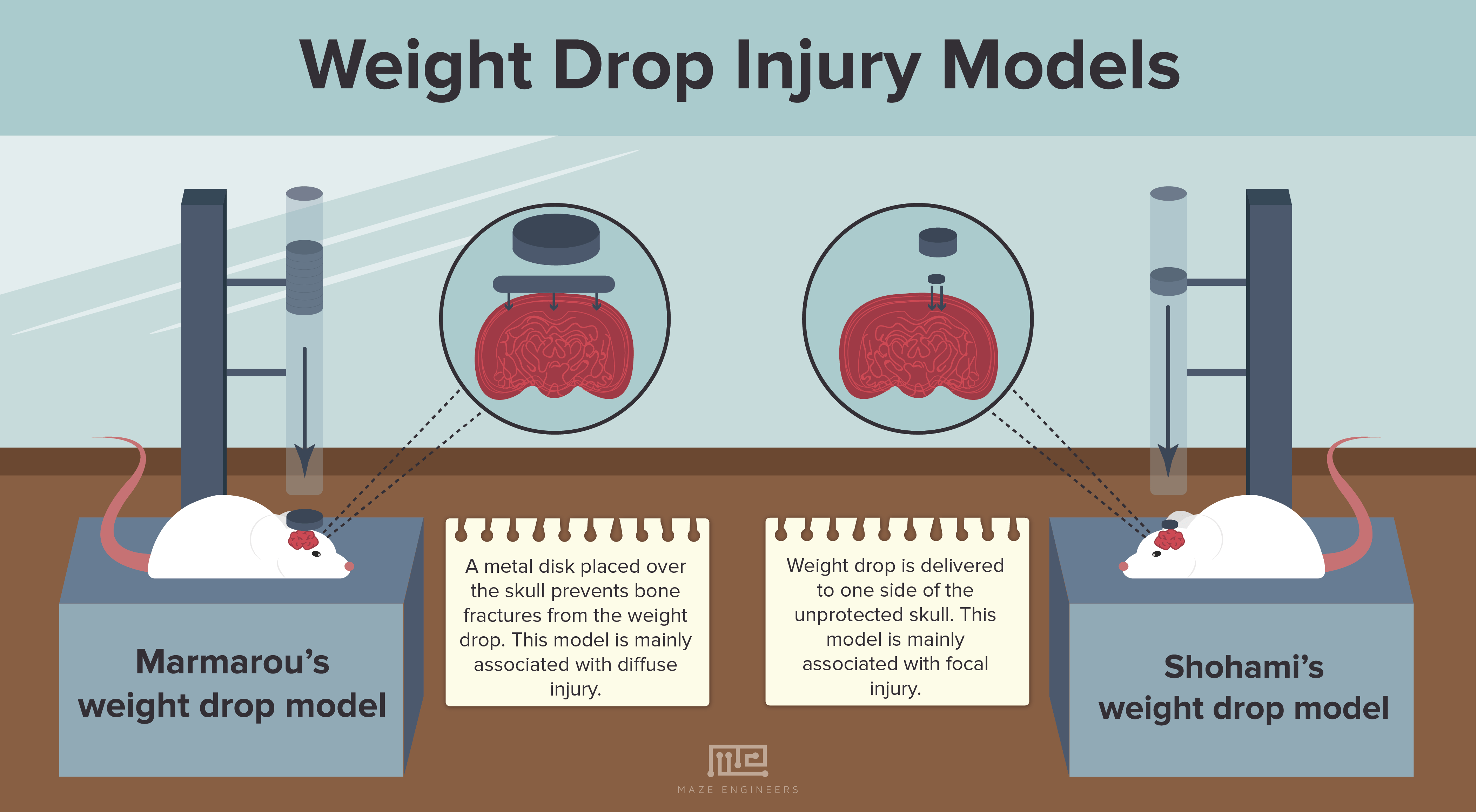 Image of Illustration of a Weight drop injury model