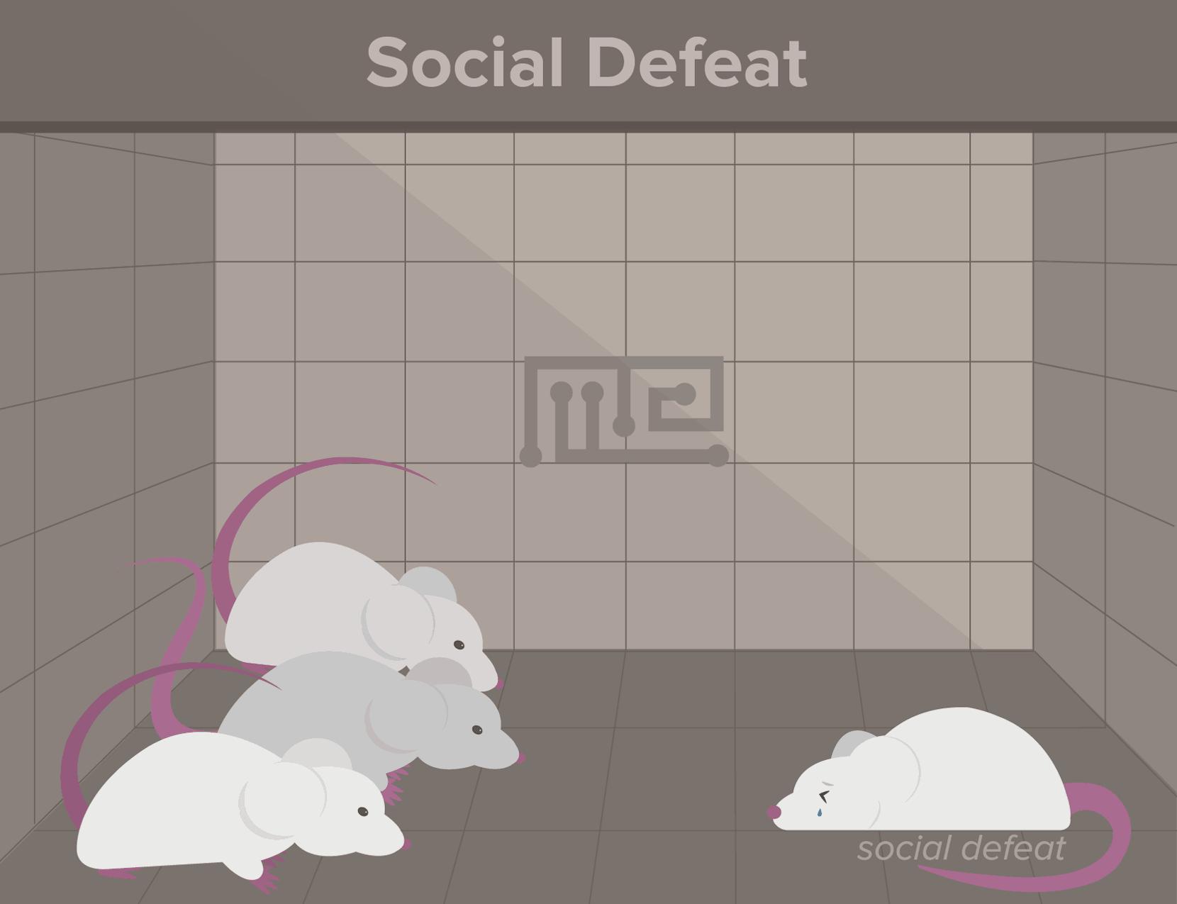 social defeat-social hierarchy in animals