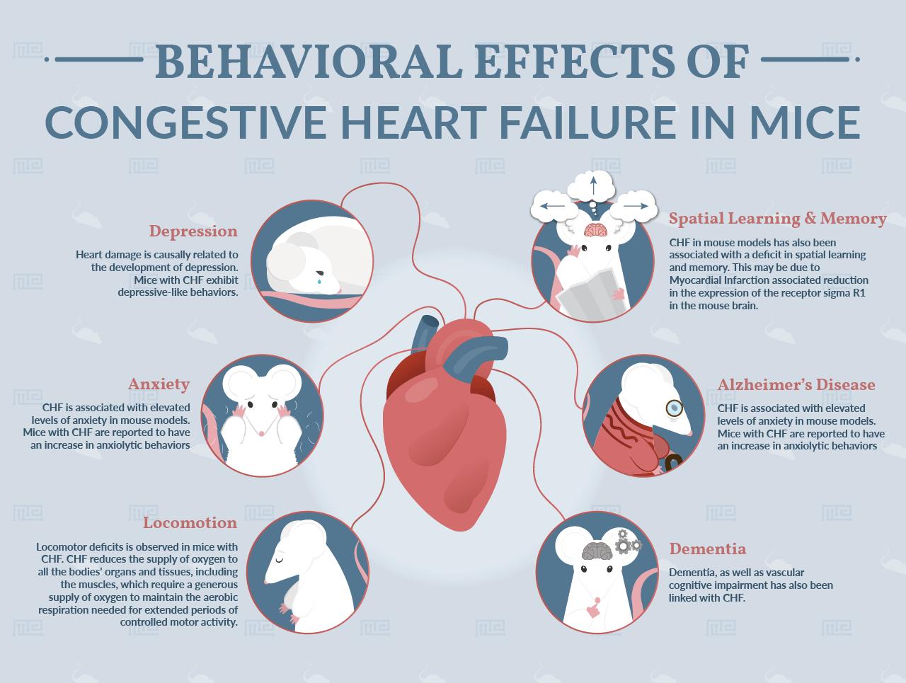 Congestive Heart Failure and dementia in Mice