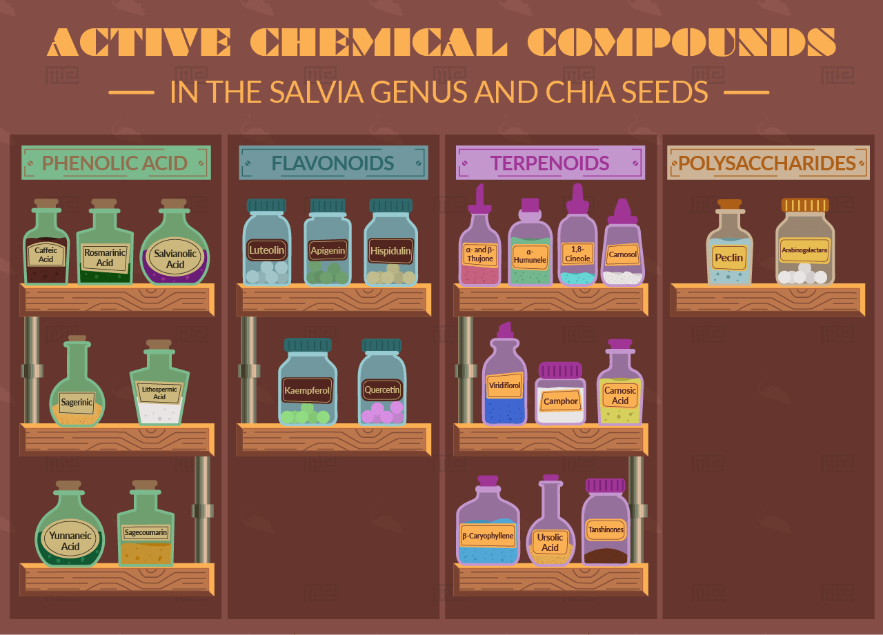 active chemical components of chia seed.png
