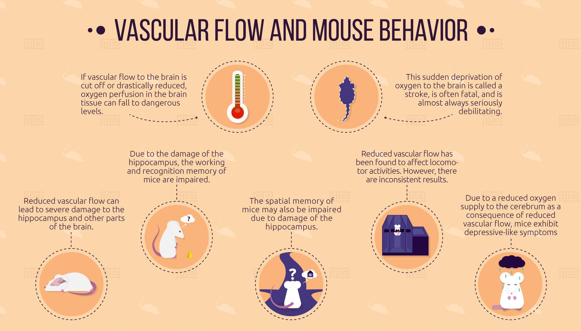 Vascular-Flow-and-Mouse-behavior