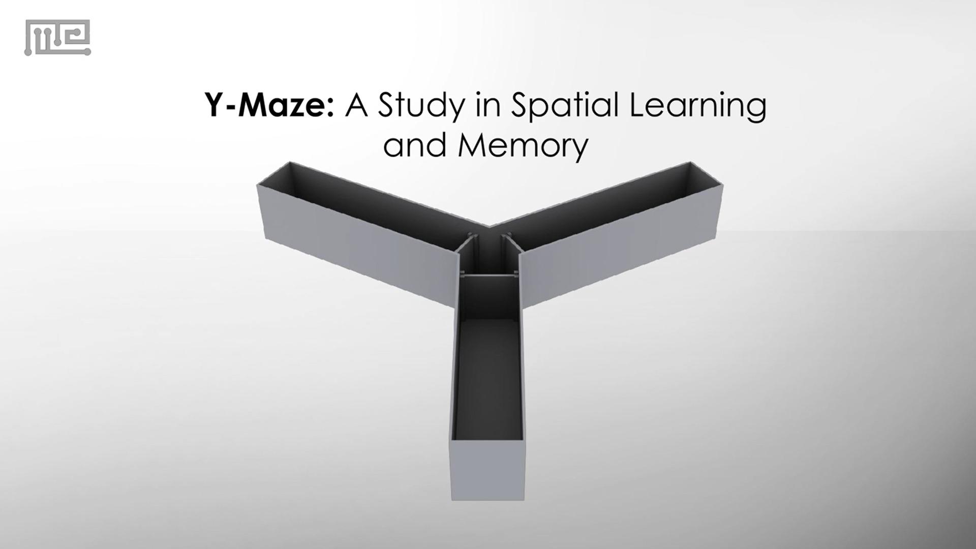 y maze test comparison