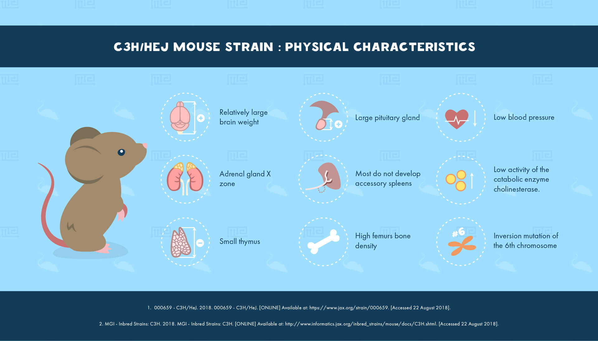 C3H/HeJ Mouse Strain : Physical Characteristics