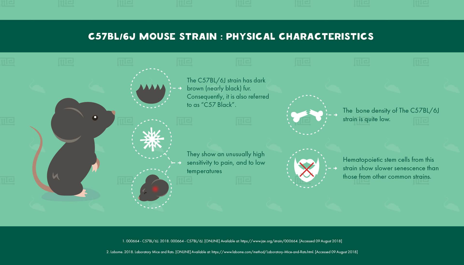 C57BL/6J Mouse Strain : Physical Characteristics