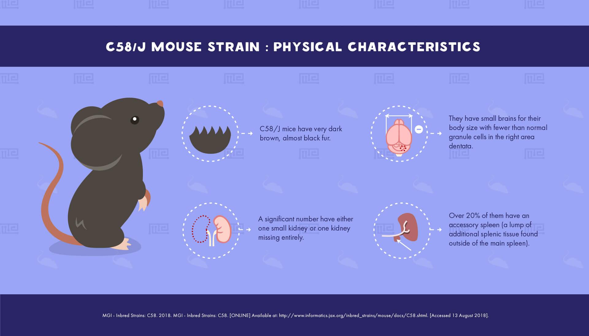 C58/J Mouse Strain - physical Characteristics