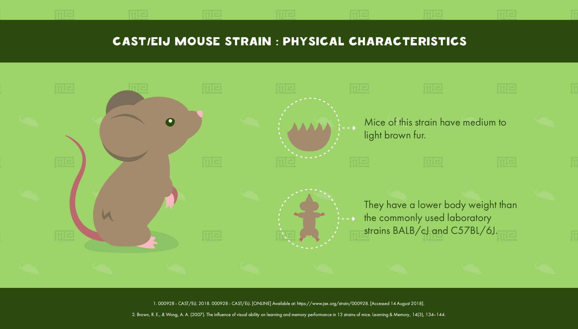 CAST EiJ Mouse Strain - Physical Characteristics