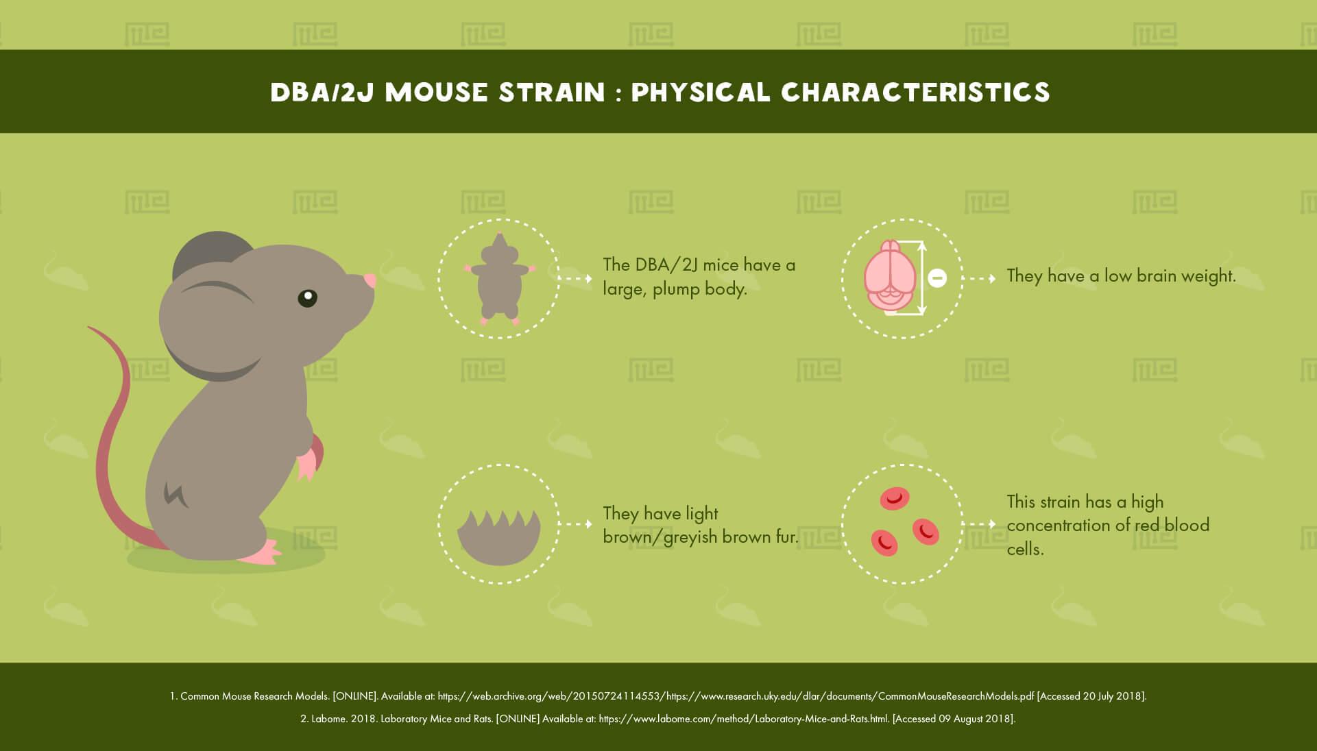DBA/2J Mouse Strain - Physical Characteristics