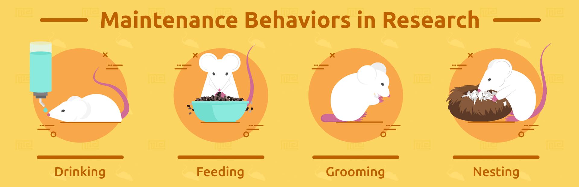 Maintenance-Behaviors-in-Research