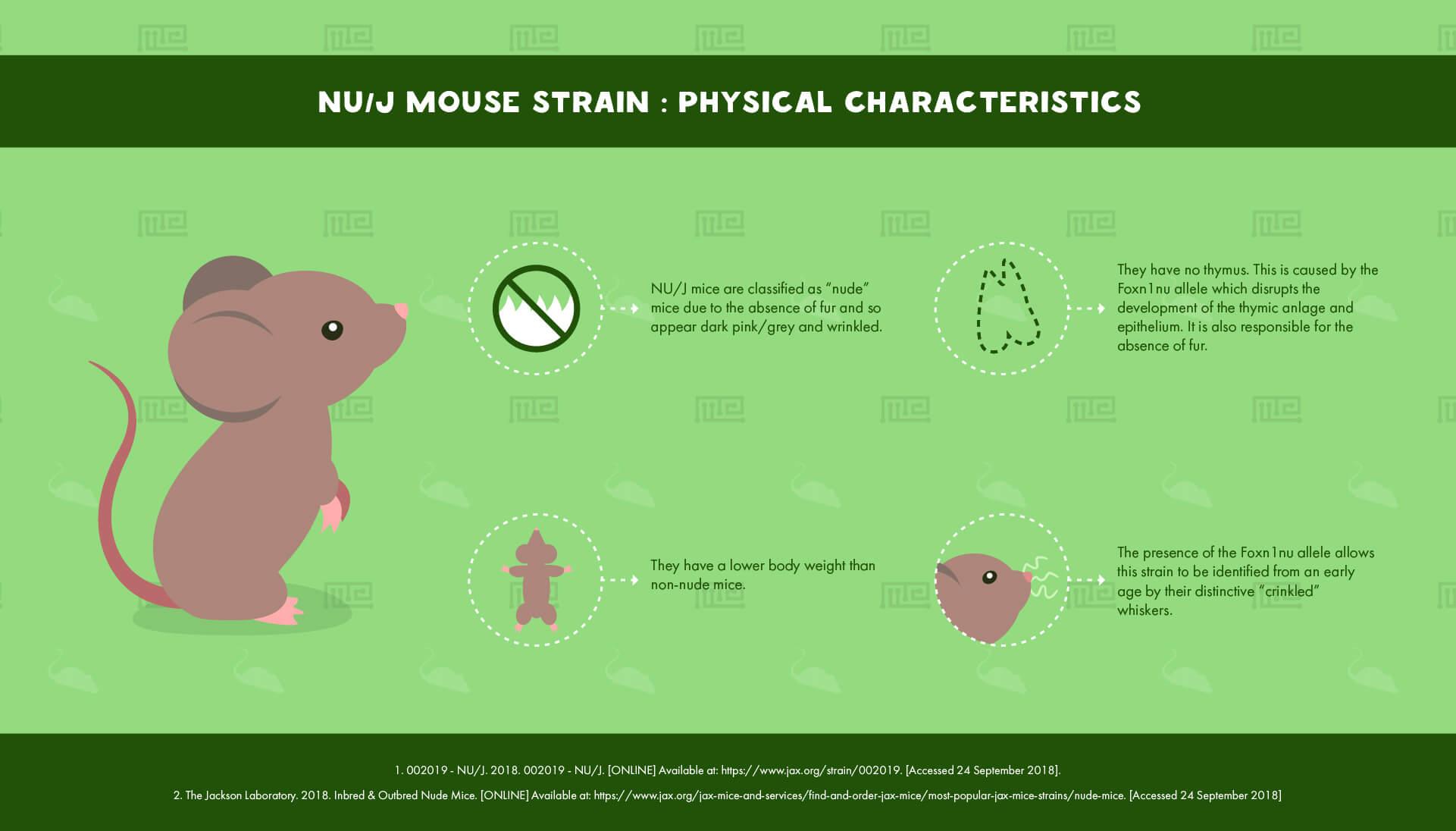 NU J Mouse Strain - Physical Characteristics