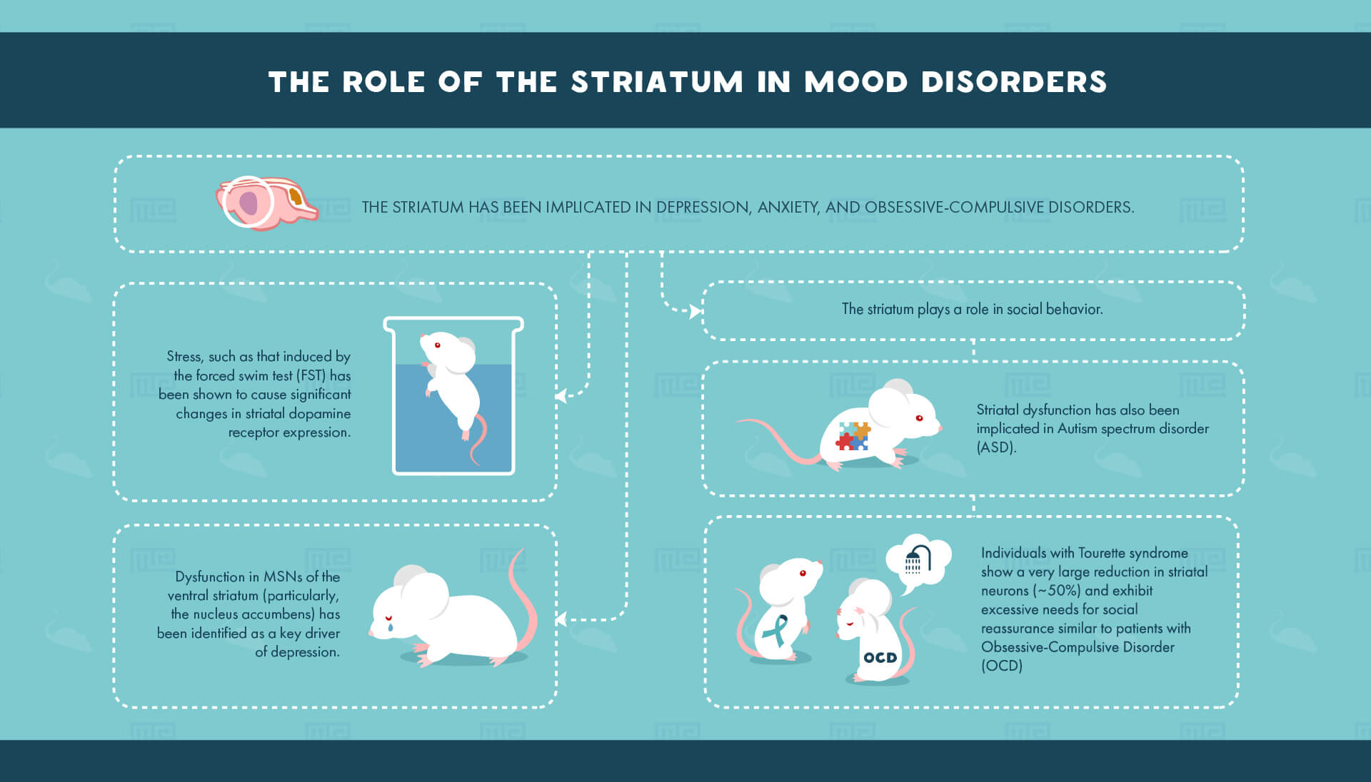 striatum and mood disorder