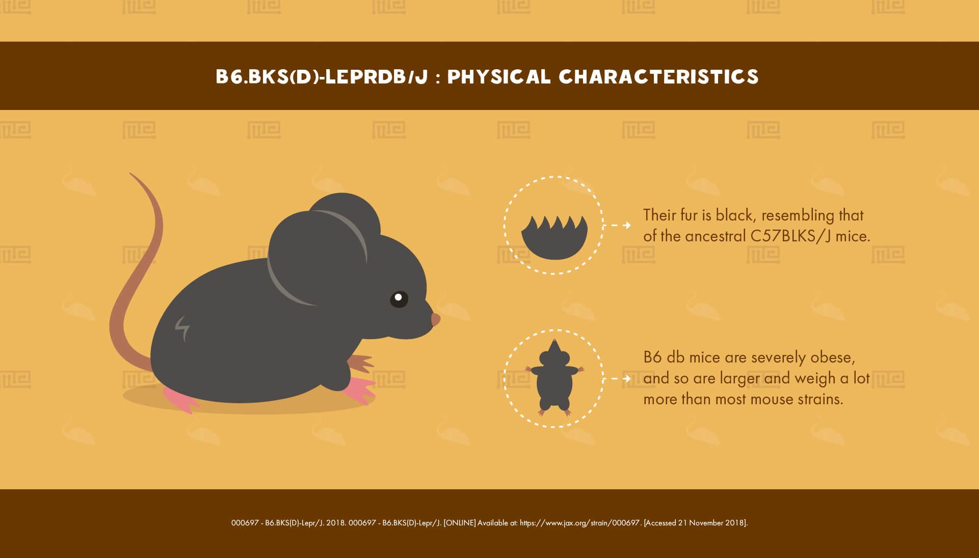 1_B6.BKS(D)-Leprdb J - Physical Characteristics