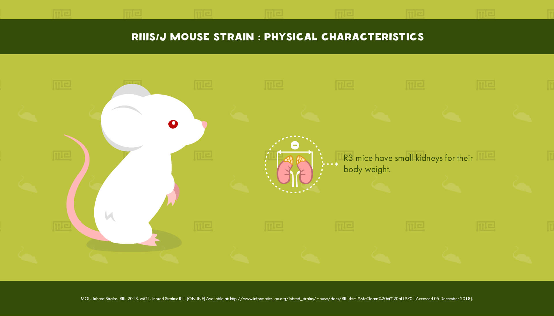 RIIIS J Mouse Strain - Physical Characteristics