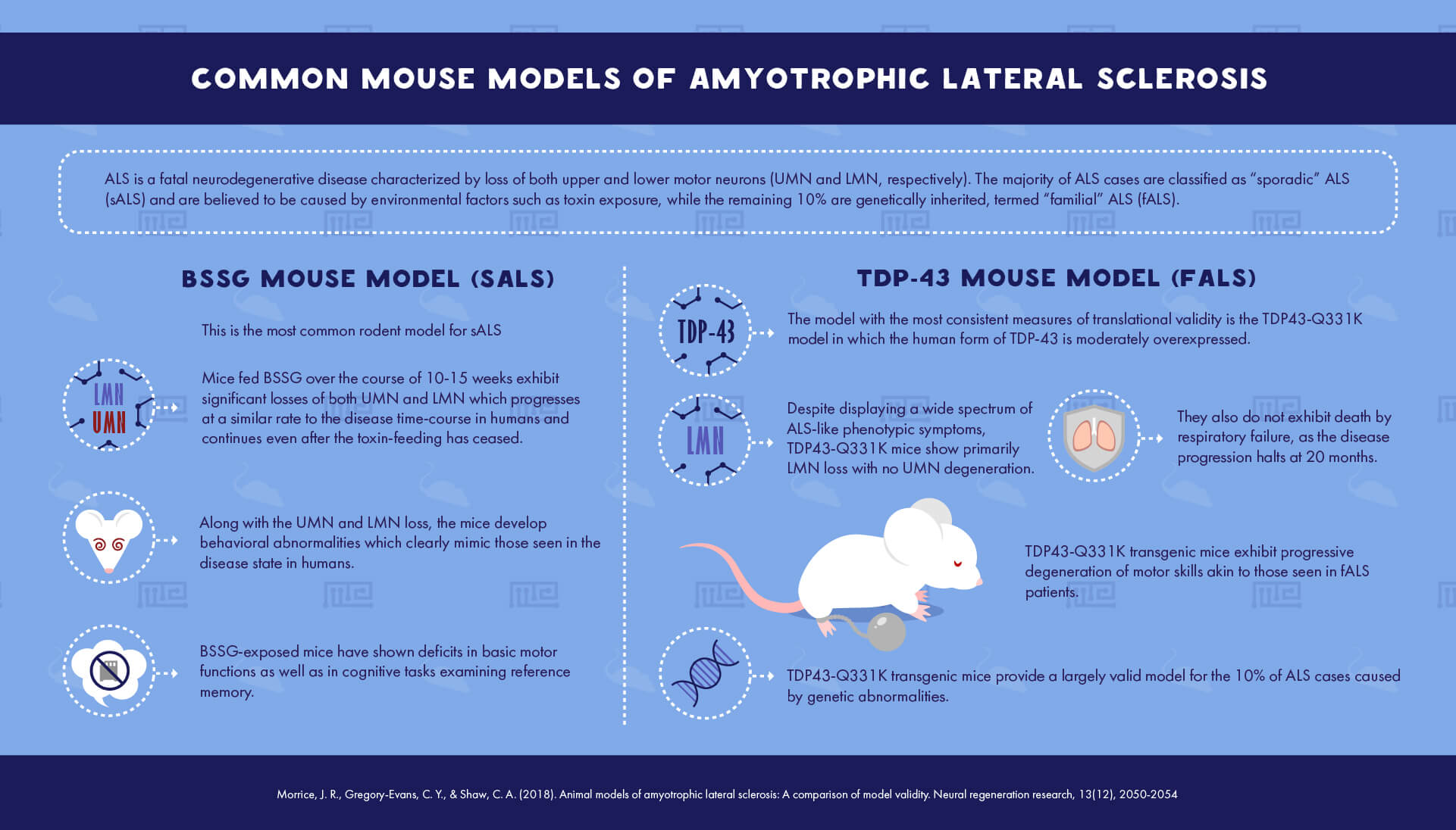 Common mouse models of Amyotrophic Lateral Sclerosis
