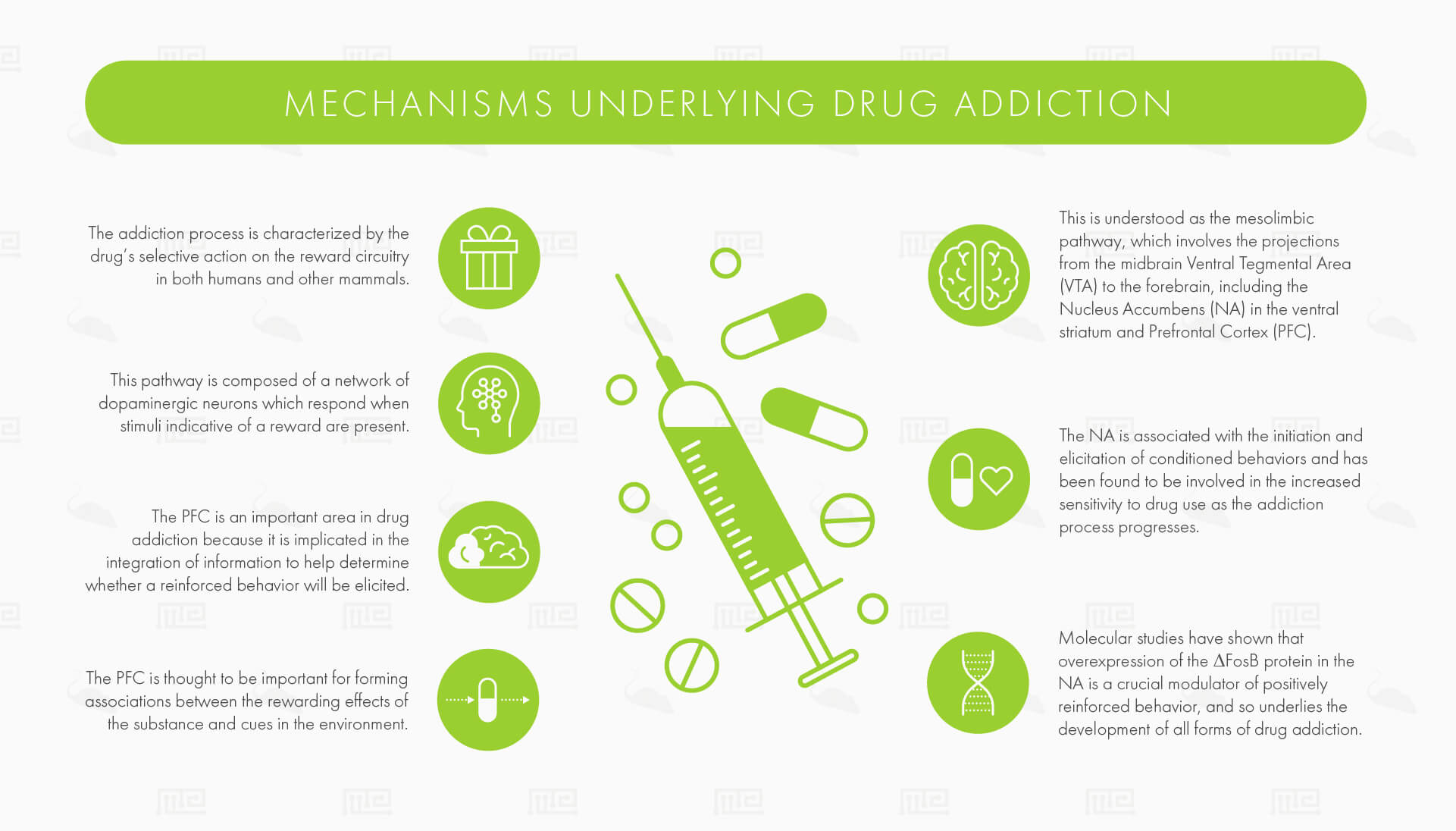 mechanisms underlying drug addiction