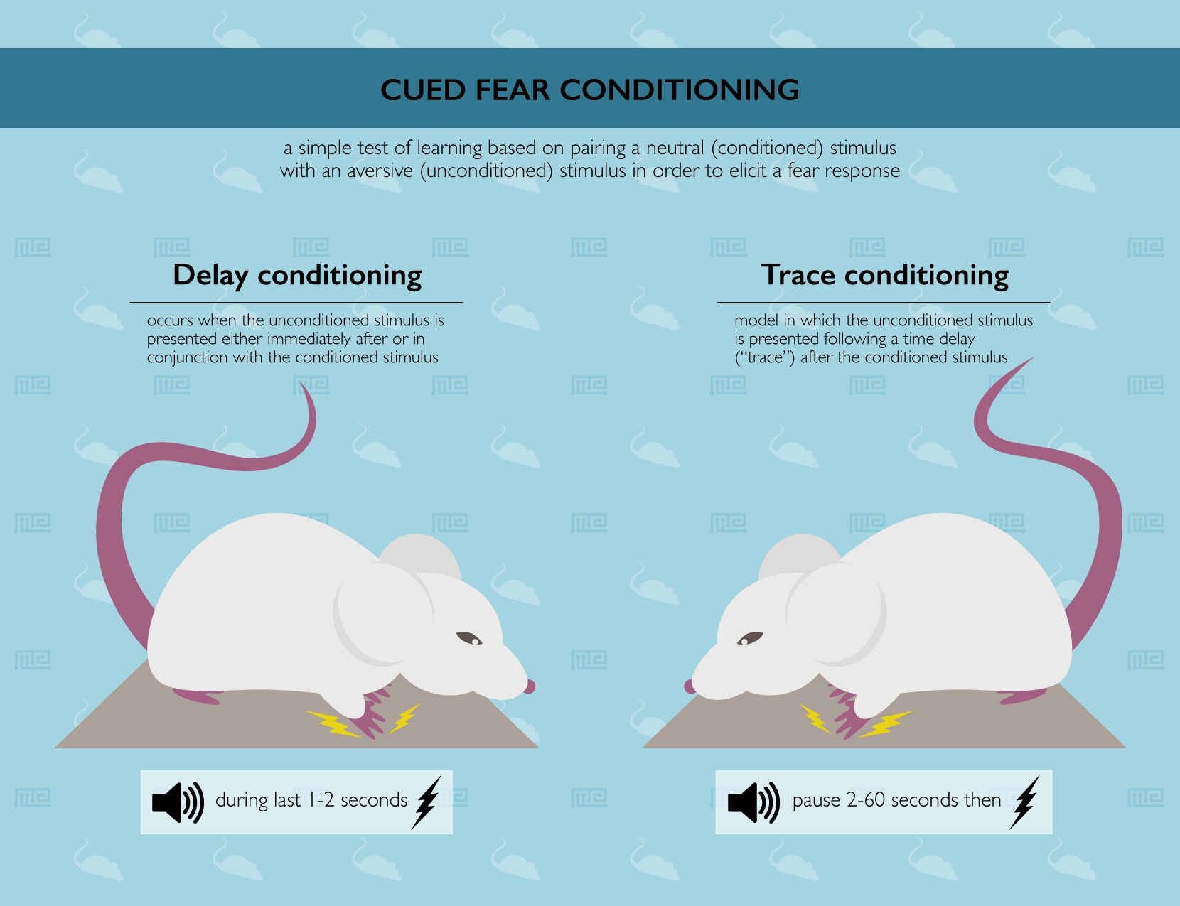 Cued Fear Conditioning