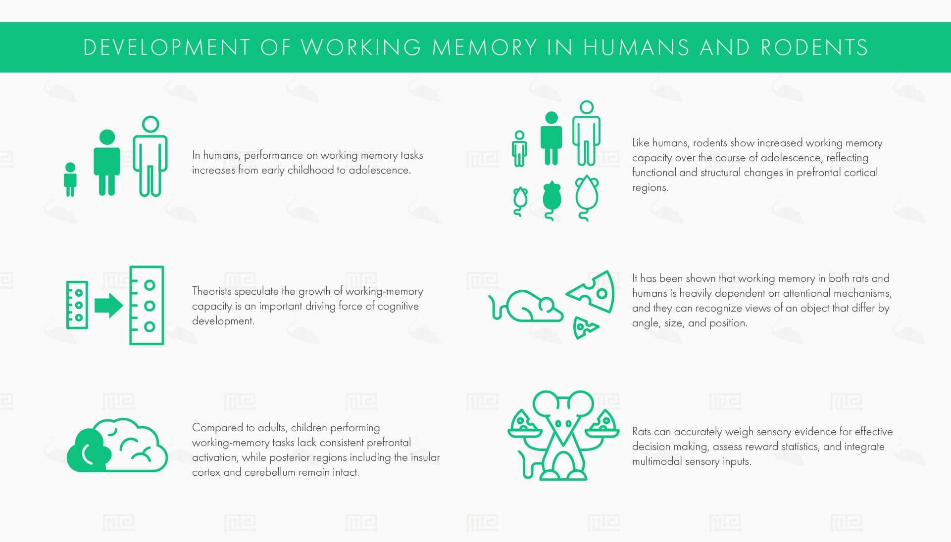 Development of Working Memory in Humans and Rodents