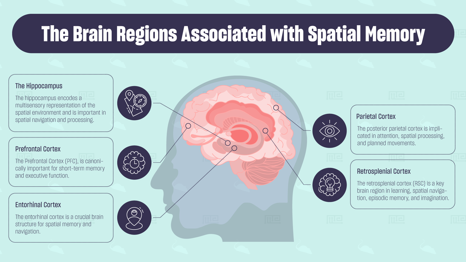 The Brain Regions Associated with Spatial Memory
